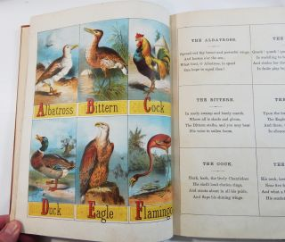 The Child's Picture Book of Alphabets(?)