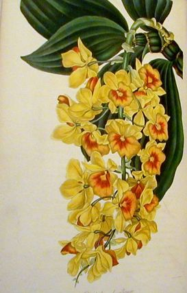 Paxton's Magazine of Botany and Register of Flowering Plants: Volume the Fifth. Joseph Paxton