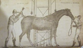 The Gentleman's New Pocket Farrier, Comprising a General Description of the Noble and Useful Animal The Horse; ...