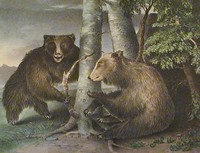 The Cabinet of Natural History and American Rural Sports: Volume I.