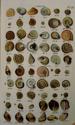 Index Testaceologicus; Or A Catalogue of Shells, British and Foreign, Arranged According to The Linnean System;; With the Latin and English Names, References to Authors, and Places Where Found.
