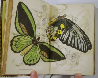 The Natural History of Foreign Butterflies